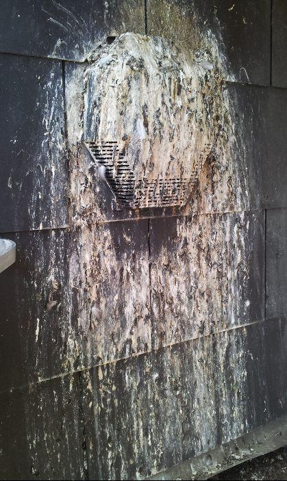pigeon droppings on wall