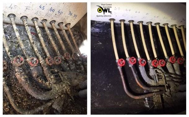 bird-cleaning-service-before-after-2