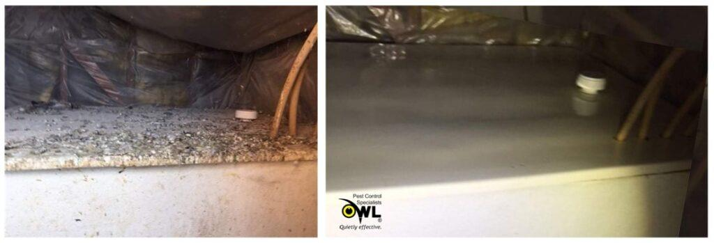 bird-cleaning-service-before-after-3